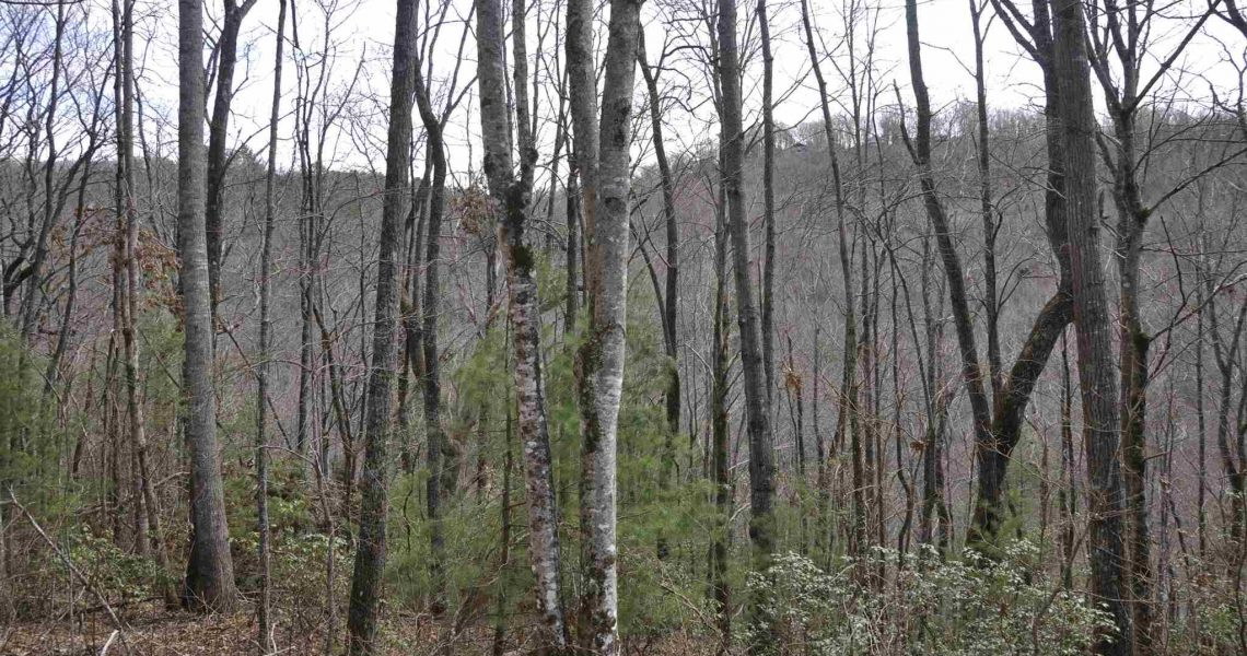 Lot-7-Winding-Ridge - Selling Real Estate Chip Durpo RE/MAX Agents Realty
